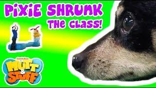 Pixie Shrunk the Class!   Mutt & Stuff (2015)