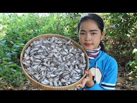 Xxx Mp4 Awesome Cooking Fried Fish Ball Using 1000 Fish Recipe Cook Delicious Recipes Village Food Factory 3gp Sex