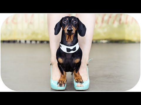 Xxx Mp4 Dachshund Dog Hot Dance 3gp Sex