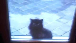 chat qui prie allah