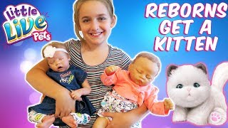 Reborn Baby Doll Unboxing Surprise Kitten and New Reborn Outfits | The Patsy Family