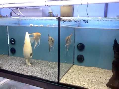 Aquários & Aquários Apresentação da loja alguns aquários e respectivos peixes