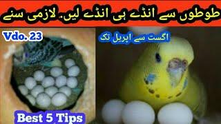 Best Breading Tips in this season in urdu/Hindi. Australian Parrots ka eggs dyna by |Arham| Video.23