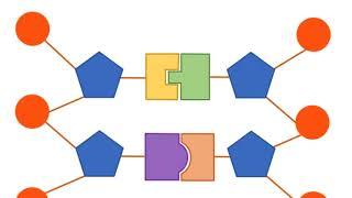 Edexcel IGCSE Human Biology 1.2 DNA
