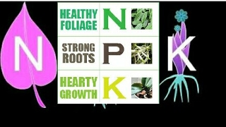 Flowering fertilizer NPK || How to use NPK fertilizer