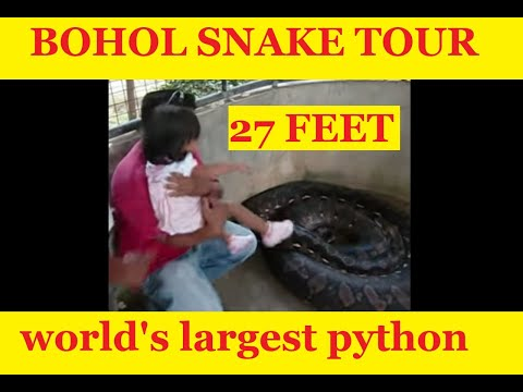 Biggest Snake In The World, Bohol, Philippines - TravelOnline