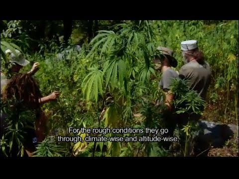 Strain Hunters India Expedition FULL HD MOVIE