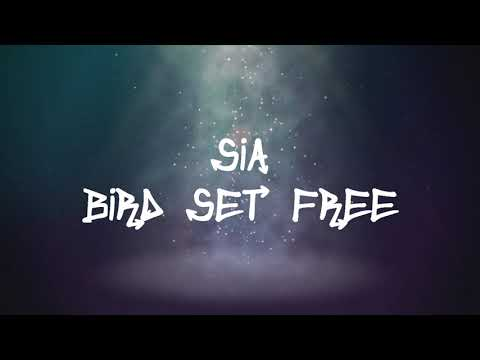 Xxx Mp4 Sia Bird Set Free Lyrics 3gp Sex