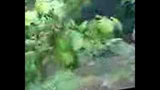 Patalpani Accident, Indore India Mobi