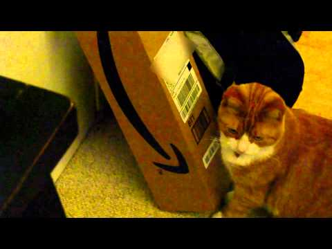 Sunny Loves Licking Receipts and Shipping Labels