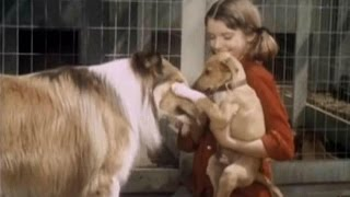 "Lassie - Episode #393 -  ""Little Dog Lost"" - Season 12, Ep.8   - 10/31/1965"