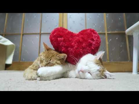 のせ猫 x  ハート Cat and heart 170214