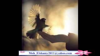 محمد منير يا حمام بتنوح ليه