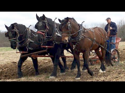 Xxx Mp4 Horse Plowing With Farmer Bob 3gp Sex