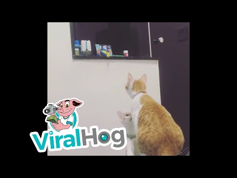 Xxx Mp4 Sister Cat Gets Toy For Brother ViralHog 3gp Sex