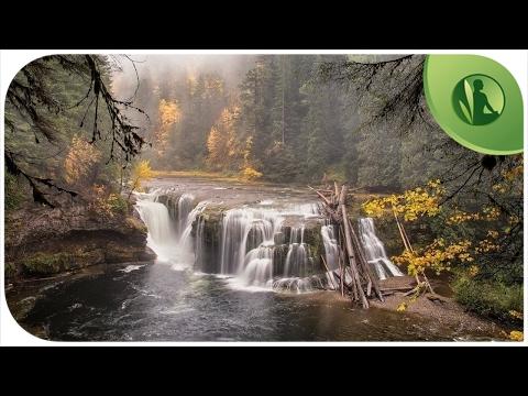 Sons da Natureza: Sons da Floresta 🌿 Sons de Água💧 Água Corrente 💦  Cachoeira 🐦 Sons Pássaros