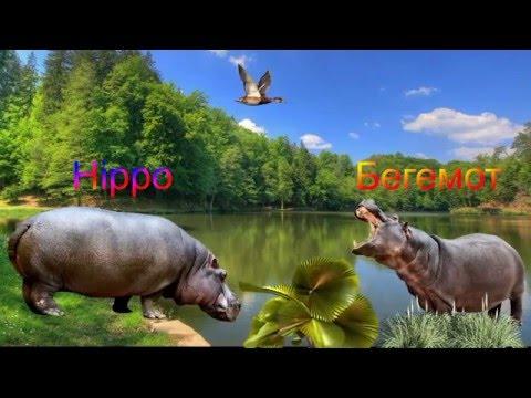Скачать песни про животных