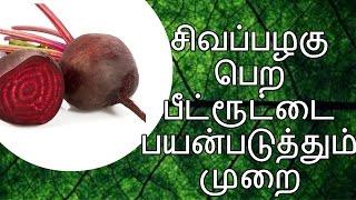 ✅சிவப்பழகு பெற பீட்ரூட்டை அப்படி பயன்படுத்துவது - Tamil beauty tips / tamil Azhagu kurippu