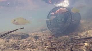 COOL UNDERWATER VIDEO MINNOW TRAP IN CREEK