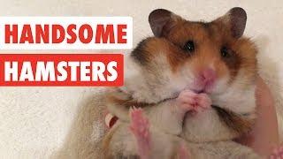 Handsome Hamsters   Funny Hamster Video Compilation 2017