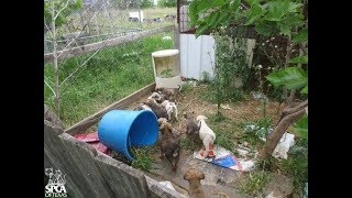 Puppies Trapped In Dirty Backyard Are So Happy To See Their Rescuers