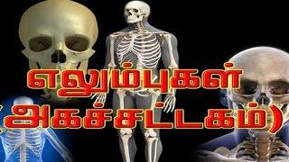 எலும்புகள் ( அகச்சட்டகம்) - skeletal system - Human Body System and Function