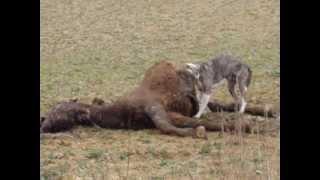 Dog eat horse...nowadays!