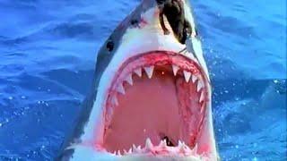 Killer Sharks!!