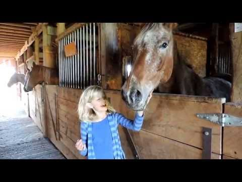 Afternoon Barn Chores! With Dani the Horse Girl