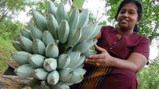 Ash Plantain (Cooking Banana) Fry Recipe prepared in my Village | Village Life