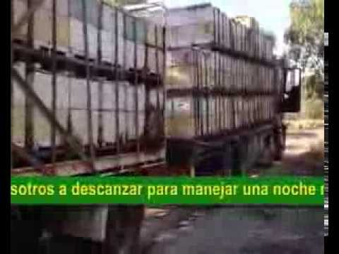 Manejo de 1500 colmenas management of production hives 1500