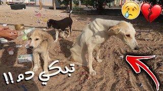 انقذنا كلبة مشلولة من الموت مع عيالها بعد حادث قوي !!💔😢