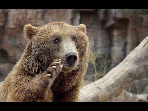 Darıca Hayvanat Bahçesi Faruk Yalçın Zoo Darıca Kocaeli