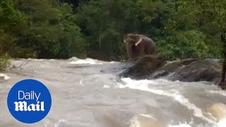 Elephant finds itself stranded in overflowing river in Kerala - Daily Mail