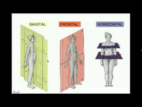Anatomia Espacial posición anatómica. planos y ejes