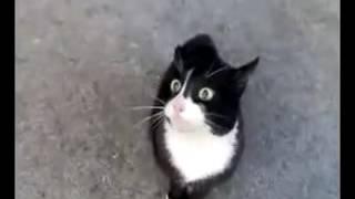 Kucing Nyanyi Lagu Raya