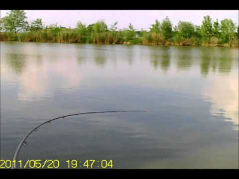 Shimano Speedmaster Heavy Feeder in action ponty 8kg carp 17 lb