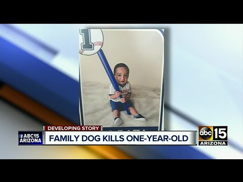 Dog attacks baby boy drags him outside before killing him