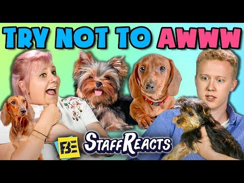 TRY NOT TO AWWW CHALLENGE w REAL PUPPIES ft. FBE Staff