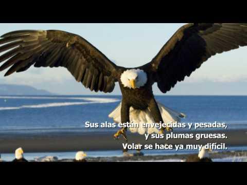 Motivación El cambio del águila HD