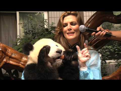 Oso Panda Beijing 2008
