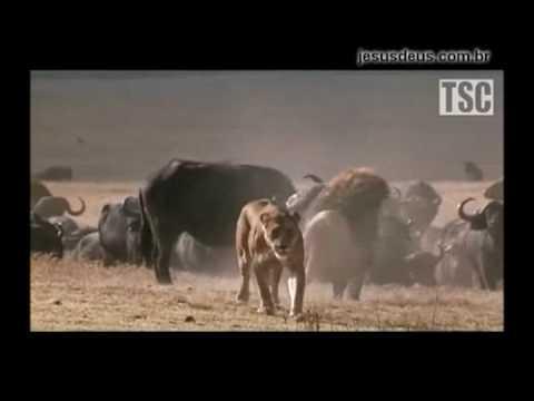 Reino animal como figura do reino espiritual