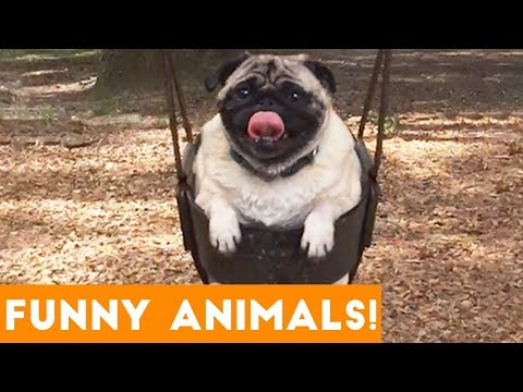 Xxx Mp4 Funniest Pets Animals Of The Week Compilation With Animal Facts January 2019 Funny Pet Videos 3gp Sex