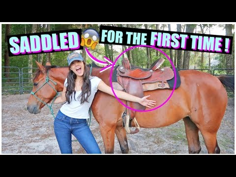 Xxx Mp4 How I Saddled My Horse For The FIRST TIME Starting Brandy PT 6 3gp Sex