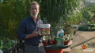 Fertilizing and feeding your plants - Seaweed / Seasol myth.