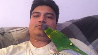 My parrot Mithu Sydney
