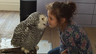 Little Girl and Owl Are BFF