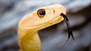 বিশ্বের সবচেয়ে বিষধর ৮টি সাপে | Most Venomous Snakes