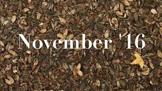 november snapshots // 2016