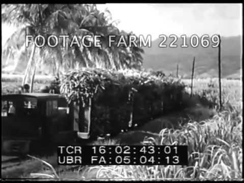 Puerto Rico Sugar Cane Harvest 221069-03 | Footage Farm